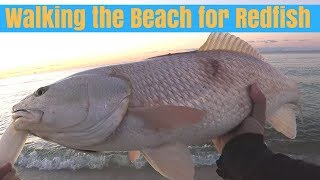Walking the Beach for Redfish - Surf Fishing Gulf Shores Alabama