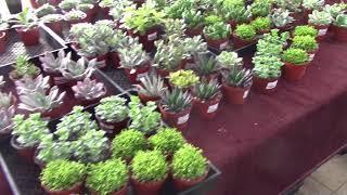 San Diego Cactus & Succulent Society 2018 Summer Sale