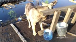 Спасение животных в Нижневартовске | Saving animals in Nizhnevartovsk - Video Youtube