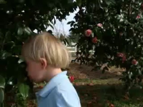 Ver vídeo Down Syndrome: Always stop to smell the roses!