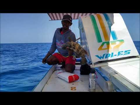 Pemancingan Ikan Kerapu hidup dan Mati Nelayan Kepulauan Spermonde
