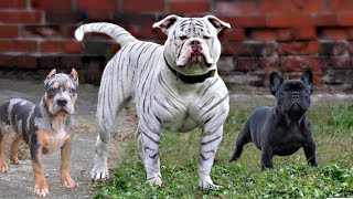 These Are 10 Most Unknown Dog Breeds