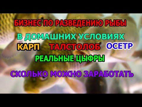 , title : 'КАК ОРГАНИЗОВАТЬ БИЗНЕС ПО РАЗВЕДЕНИЮ РЫБЫ СКОЛЬКО МОЖНО ЗАРАБОТАТЬ  БИЗНЕС ИДЕЯ