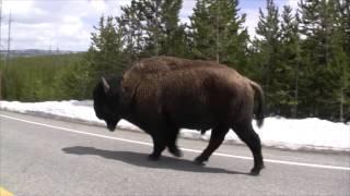 Yellowstone - South Entrance, Yellowstone National Park