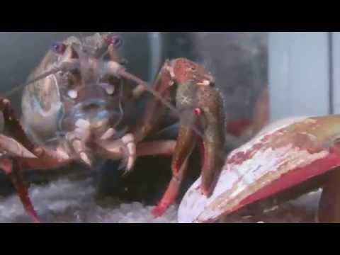 Die Würmer bei den Katern und ihre Behandlung