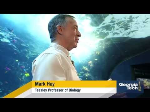 Mark Hay explains coral conservation