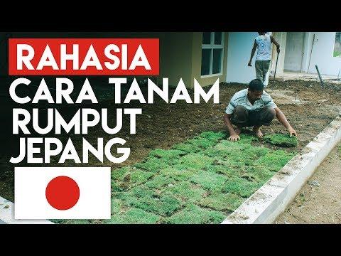 Video Ternyata ini Rahasia cara menanam rumput jepang
