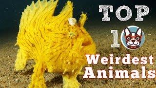 Top 10 Weirdest Animals Found on Earth