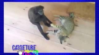 Funny Videos - Monkeys