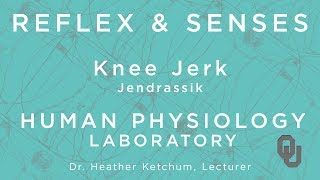 Knee Jerk - Jendrassik for students | Reflex & Senses | Human Physiology | Dr. Ketchum
