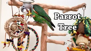Truman Cape Parrot Playing on His New Tree Stand