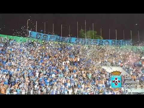 """""""LOS CHIFLADOS 20 AÑOS DE AGUANTE"""" Barra: Los Chiflados • Club: Blooming"""