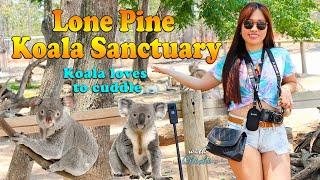 Koalas Love Cuddles / Lone Pine Koala Sanctuary Brisbane Australia 2020 /  things to do in brisbane