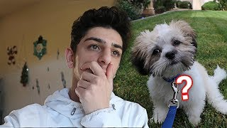 What REALLY happened to my new dog..?   FaZe Rug