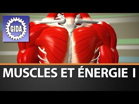 À lintérieur du muscle la condensation douloureuse