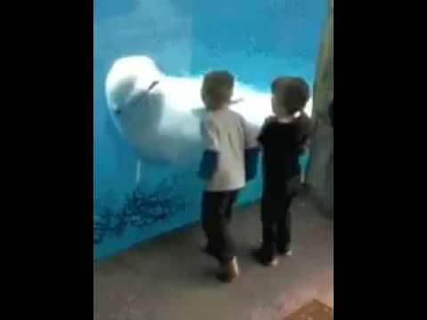 Ai bảo cá mập không dễ thương?