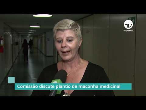 Comissão discute plantio de maconha medicinal - 11/02/20