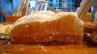 HoneyHarvest