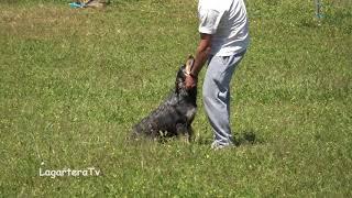 Perro Carea Castellano Oscar Galán con la perra Cala