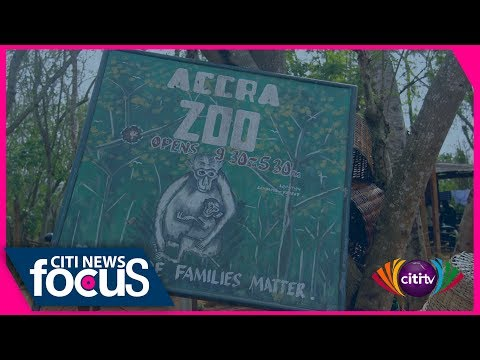 Citi News Focus: Accra's forgotten Zoo in Achimota forest