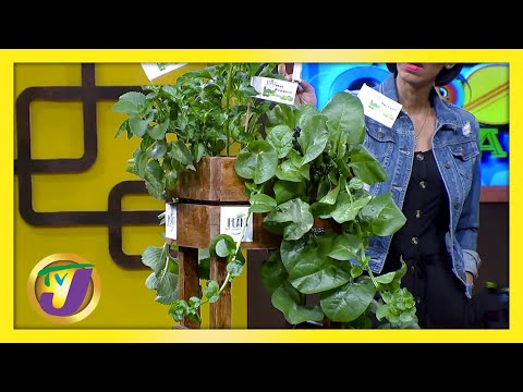 Urban Garden TVJ Smile Jamaica March 5 2021