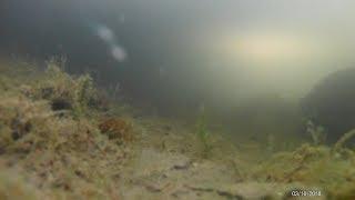 Какая рыба клюет зимой в пруду