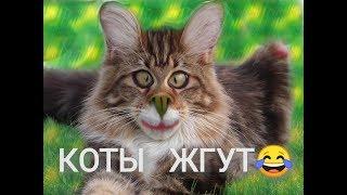 ТОП подборка ПРИКОЛОВ с котами 2018! Funny cats