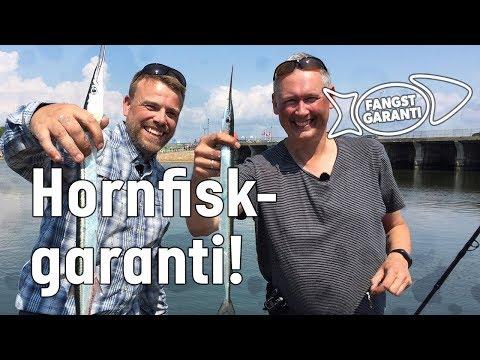 Fiskeri efter hornfisk i Hvide Sande