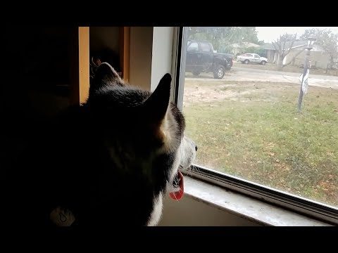 Malamute Reacts to Ghost Bag……………lmbo!