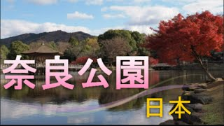 入場無料の観光名所!奈良公園奈良県周辺火は世界遺産多数!日本、奈良26