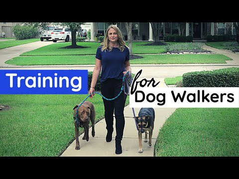 Training You NEED to be a Dog Walker - YouTube