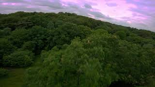 FPV Freestyle in - Epping Forest -