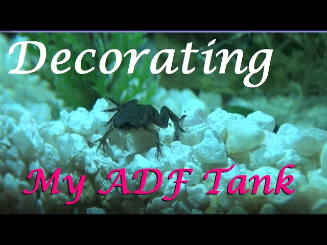 Decorating my African Dwarf Frog Tank |  PARTIAL SETUP