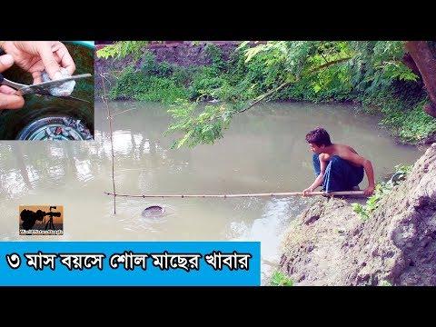 ৩ মাসের শোল মাছের খাবার তৈরি  - snakehead fish feeding video