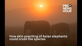 Elephant Poaching Crisis Covered on National Television