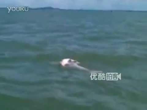 Mamma delfino non si separa dal cucciolo morto