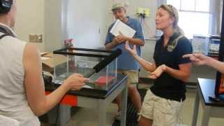 History of Lake Erie Watersnake Recovery