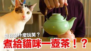 泡一壺茶給貓咪?全家都傻眼了|貓副食食譜|貓鮮食廚房EP182