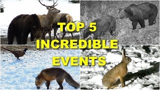 TOP 5 INCREDIBLE EVENTS IN WILDLIFE CAUGHT ON CAMERA
