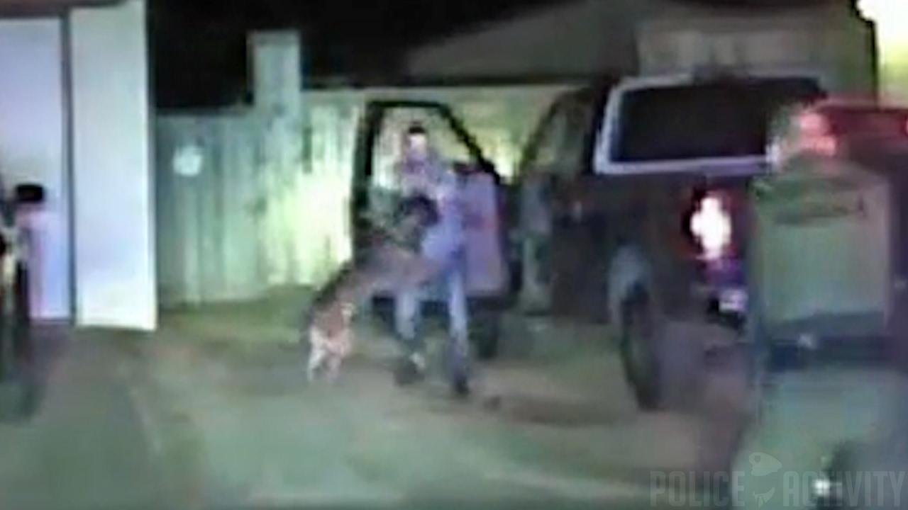 Отважный пёс обезоружил преступника (видео)