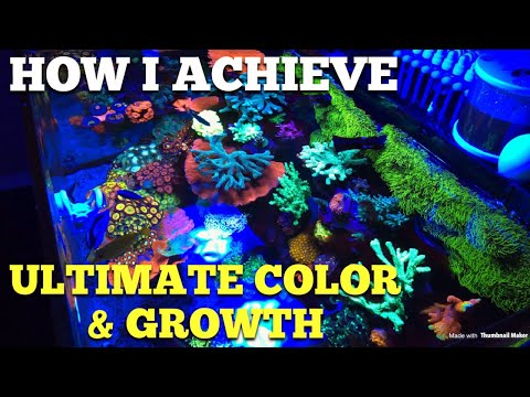 How I Achieve Best Coral Coloration