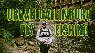 Urban Gatlinburg Fly Fishing for Trout!!! - Little Pigeon River