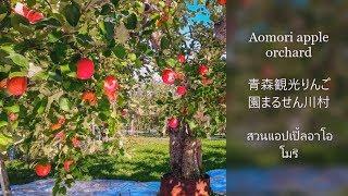 Aomoriappleorchard青森観光りんご園まるせん川村สวนแอปเปิ้ลอาโอโมริ