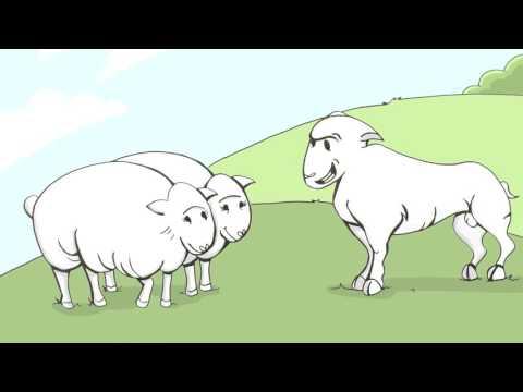 Video Johne's Disease in Canadian Sheep Flocks