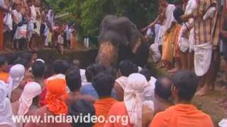 Farewell to elephants at Akkare Kottiyoor