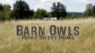 Barn Owls: Home Sweet Home