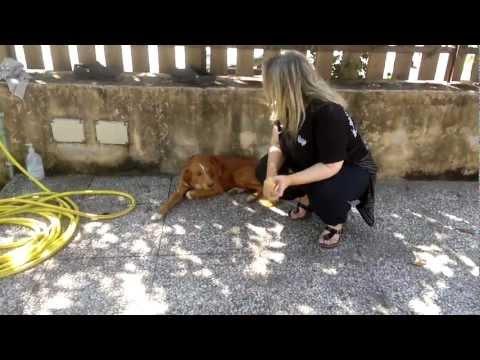 Come trattare le articolazioni tumore di un cavallo