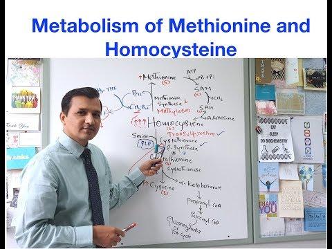 Metionin fogyás. Vitamin Sziget - Keresés - metionin
