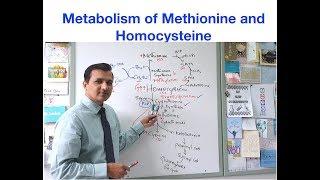 Metabolism Of Methionine And Homocysteine