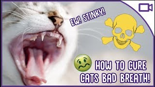 Why Does My Cat Have Bad Breath? - How to Cure It!